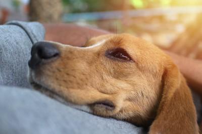 飼い主に抱きしめられて嬉しそうな犬