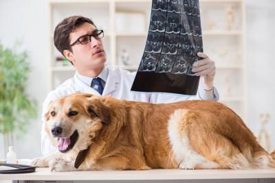 検査結果を見る獣医師と犬