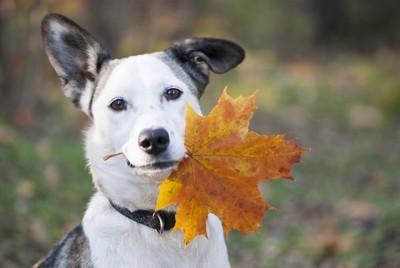 落ち葉を銜えた犬