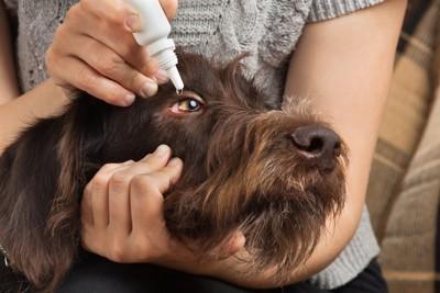 飼い主に目薬をさされている犬