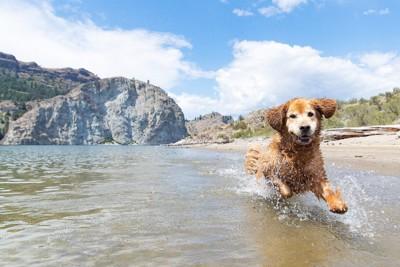 水の中を楽しそうに走っている犬