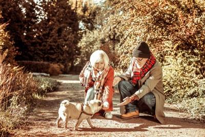 犬と老夫婦