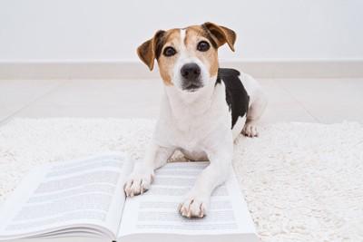 本に手をのせて伏せる犬