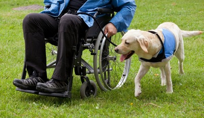 車いすの横を歩く犬