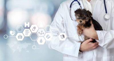 獣医師に抱かれるヨーキーの子犬