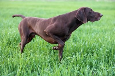 ポインティングポーズをしている黒い犬