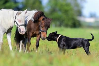 馬と顔を近づける犬