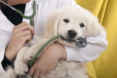 獣医師に抱かれて聴診器を咥える犬
