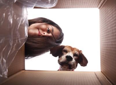 箱の中を覗く女性と犬
