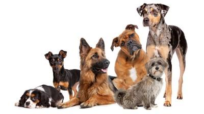 様々な犬種の6匹の犬