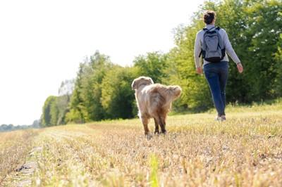 散歩する犬と人の後ろ姿
