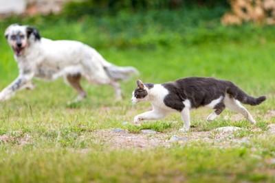 猫を見る犬