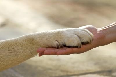 飼い主さんの手の上に犬の前足