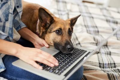 仕事をする男性のパソコンに顔を乗せる犬
