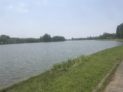 美しい水辺