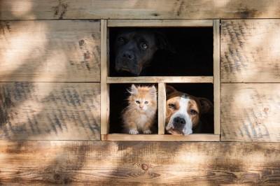 犬小屋にいる犬と猫