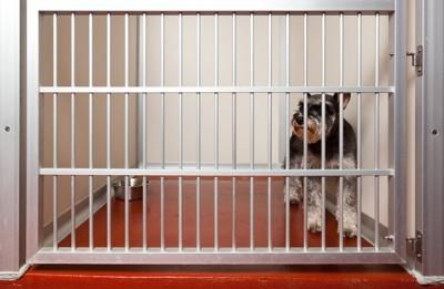 ケージの中で不安そうに立つ犬