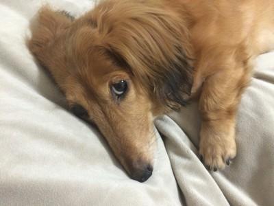引っ越し反対の愛犬