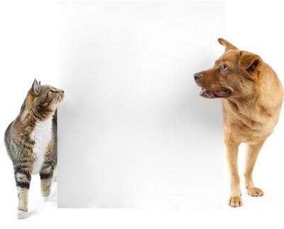 壁越しの犬と猫