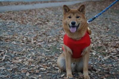 赤い服の犬
