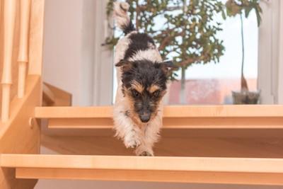 階段を降りている犬