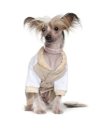 ネックレスをした犬