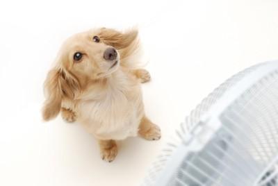 扇風機の前に立つ犬