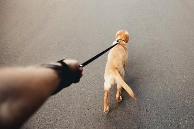 リードを引っ張る犬の後ろ姿