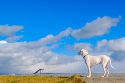 青空と犬の写真