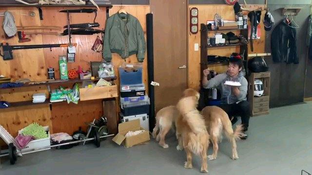 向かい合う人と犬