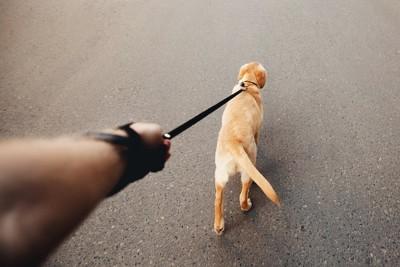 リードを引っ張って歩く犬の後ろ姿
