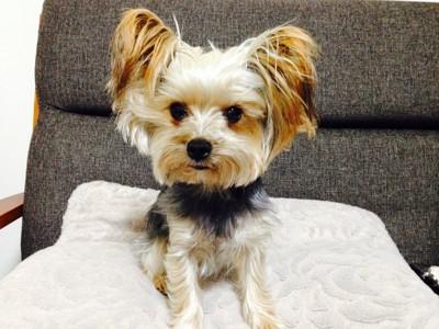 ボサボサの犬の写真