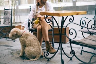 カフェで飼い主の足元に座る犬