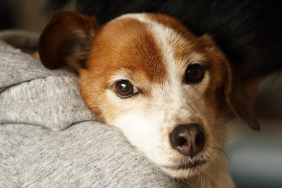 抱きしめられて安心している犬