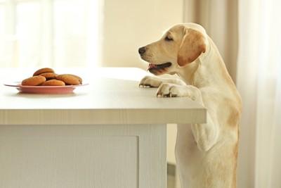 テーブルのお菓子を見つめる犬