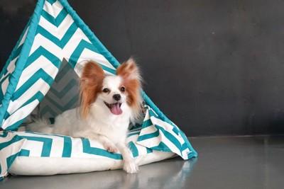 ペット用テントの中の犬