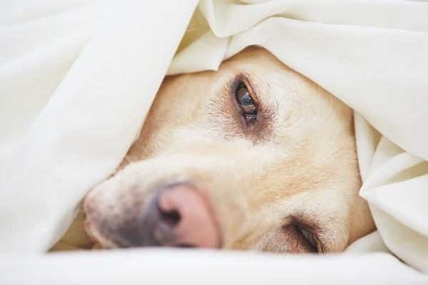 ぐったりと横たわる犬の顔