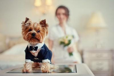 新婦の服を着ている犬