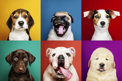 6匹の犬のポートレート