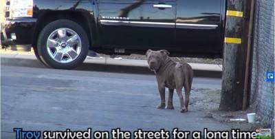 町をうろつく犬