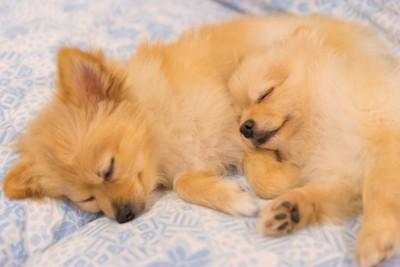 横向きで寝ている犬