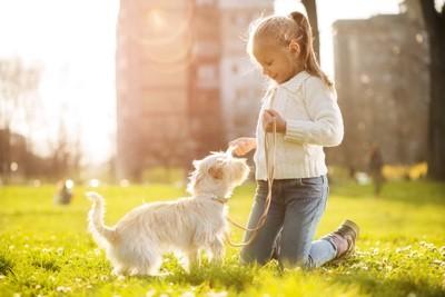 芝生にいる女の子と犬