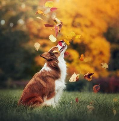 枯葉で遊ぶ犬