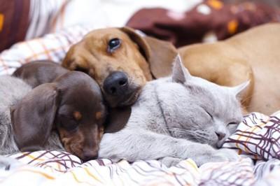 猫にあごのせしてくつろいでいる犬