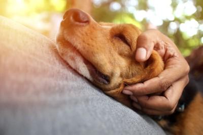 人に寄り添って目をつぶる犬