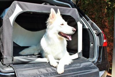 車の荷台におかれたゲージに入る犬
