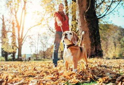 落ち葉の中散歩する犬