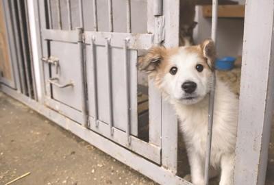 檻に閉じ込められている子犬