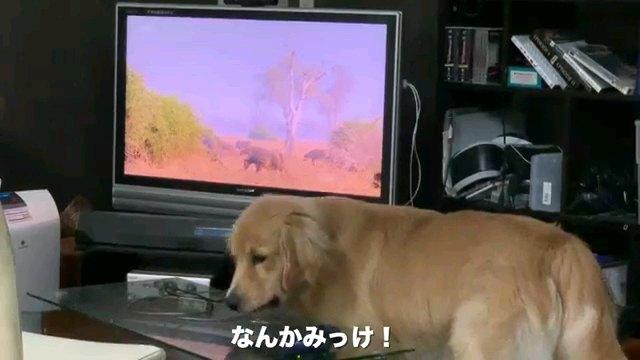 なんか~字幕