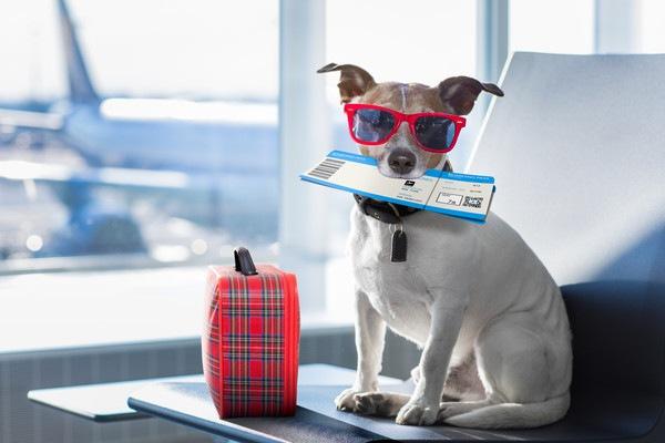 旅行に行く犬